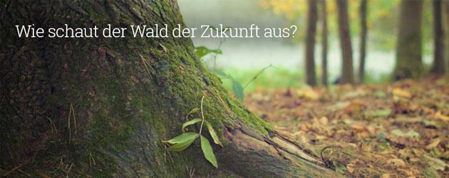 : Holzplantagen versus Wildnis